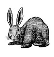 wild hare rabbit looks back bunny or coney hand vector image vector image