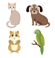 pet mascot isolated icon vector image