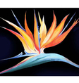 Birds-of-Paradise Acrylic painting verson vector image vector image