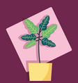 decorative plants flat image design vector image vector image