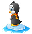little penguin on a bit of ice vector image vector image
