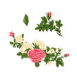 set of pink and white roses bouquets flowers and vector image vector image