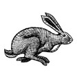 wild hare or rabbit is jumping cute bunny or vector image