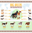 dog breeds infographics vector image vector image