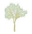 eucalyptus tree design vector image vector image