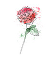 flower red roses hand drawn vector image vector image