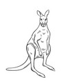 kangaroo outline vector image