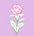 rose flower branch with buds vector image vector image