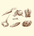 set of vegetables sketch pencil drawing vector image vector image
