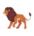 proud powerful lion safari mammal jungle animal vector image vector image