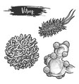 set isolated sketches rabies virus herpes vector image vector image