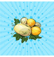 a few ripe melons on a blue background vector image vector image