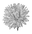 beautiful monochrome black and white aster flower vector image