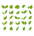leaves green icon set elegance shapes young vector image vector image