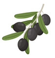 olive branch stems healthy natural decorative vector image