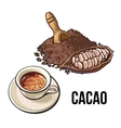 Pile of cocoa powder cacao fruit and hot vector image vector image