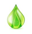 Aloe Leaf Waterdrop vector image