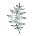 coloring page fern leaf isolated pattern vector image vector image
