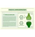 endocannabinoids horizontal infographic vector image vector image
