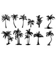 set palm trees collection silhouette vector image