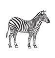 zebra isolated black icon vector image