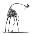graceful giraffe vector image vector image