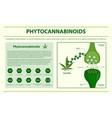 phytocannabinoids horizontal infographic vector image vector image