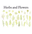 set herbs plants and flowers vector image