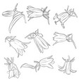 set of drawing bell flowers vector image vector image