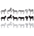 Set of zebra vector image