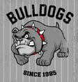 vintage bulldog mascot vector image vector image
