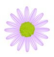 Violet Daisy Flower on A White Background vector image vector image