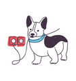 adorable dog gnawing or eating wires funny vector image