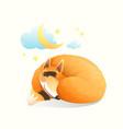 baby animal fox sleeping at night under stars vector image