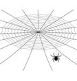 spider weaves a web vector image