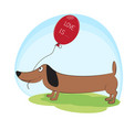 greeting card cute dog dachshund with balloon vector image