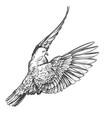 dove bird is a symbol peace and purity hand vector image vector image