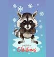 Holiday a cute raccoon