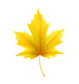 autumn yellow maple leaf leaves vector image vector image