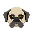 cute pug dog avatar vector image vector image