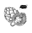 artichoke hand drawn isolated vector image vector image