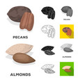 different kinds of nuts cartoonblackflat vector image vector image
