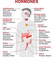hormones vector image vector image