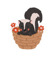 cute hand drawn skunk isolated on white vector image vector image