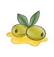 Drawing olive oil leaf spill vector image