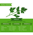 healthy collection parsley vector image