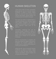human skeleton and text sample vector image vector image