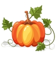Autumn Orange Pumpkin Vegetable vector image vector image