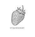 hand drawn strawberry designs vector image vector image