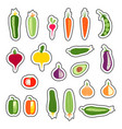 set stickers with hand drawn vegetables vector image